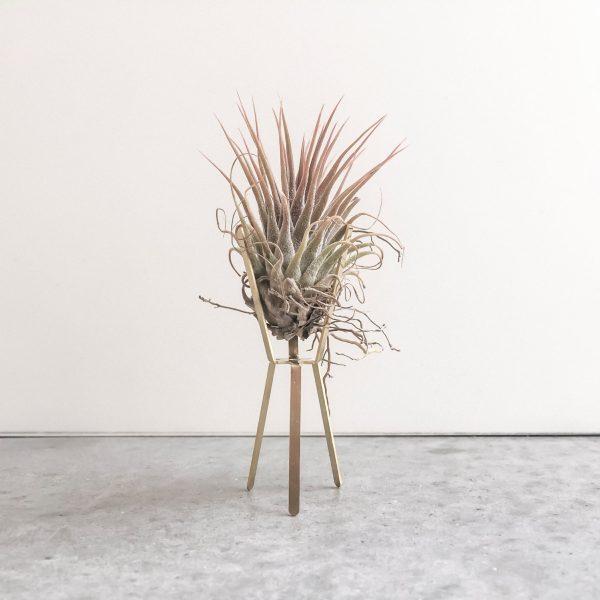 Model rak bunga kayu minimalis